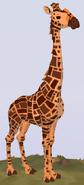 South African Giraffe WOZ