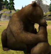 Syrian-brown-bear-zootycoon3