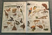 The Animal Atlas (27)