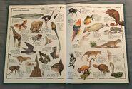 The Animal Atlas (27)