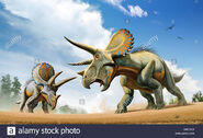 Triceratops fighting