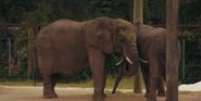 Virginia Zoo Elephants, Cita and Lisa