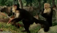 Evan Almighty Monkeys
