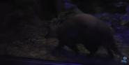 Memphis Zoo Aardvark