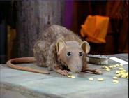 SBSQ Rat