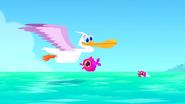 TTGIA Pelican