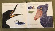 The Beak Book (2)