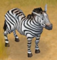 Zebra Safari Adventures
