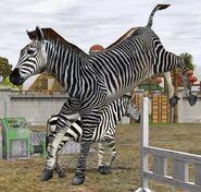 Grevys-zebra-wildlife-park-2