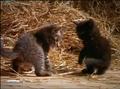 MMHM Domestic Cats