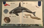 Ocean Life Dictionary (12)