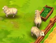 Sheep-zoo-2-animal-park