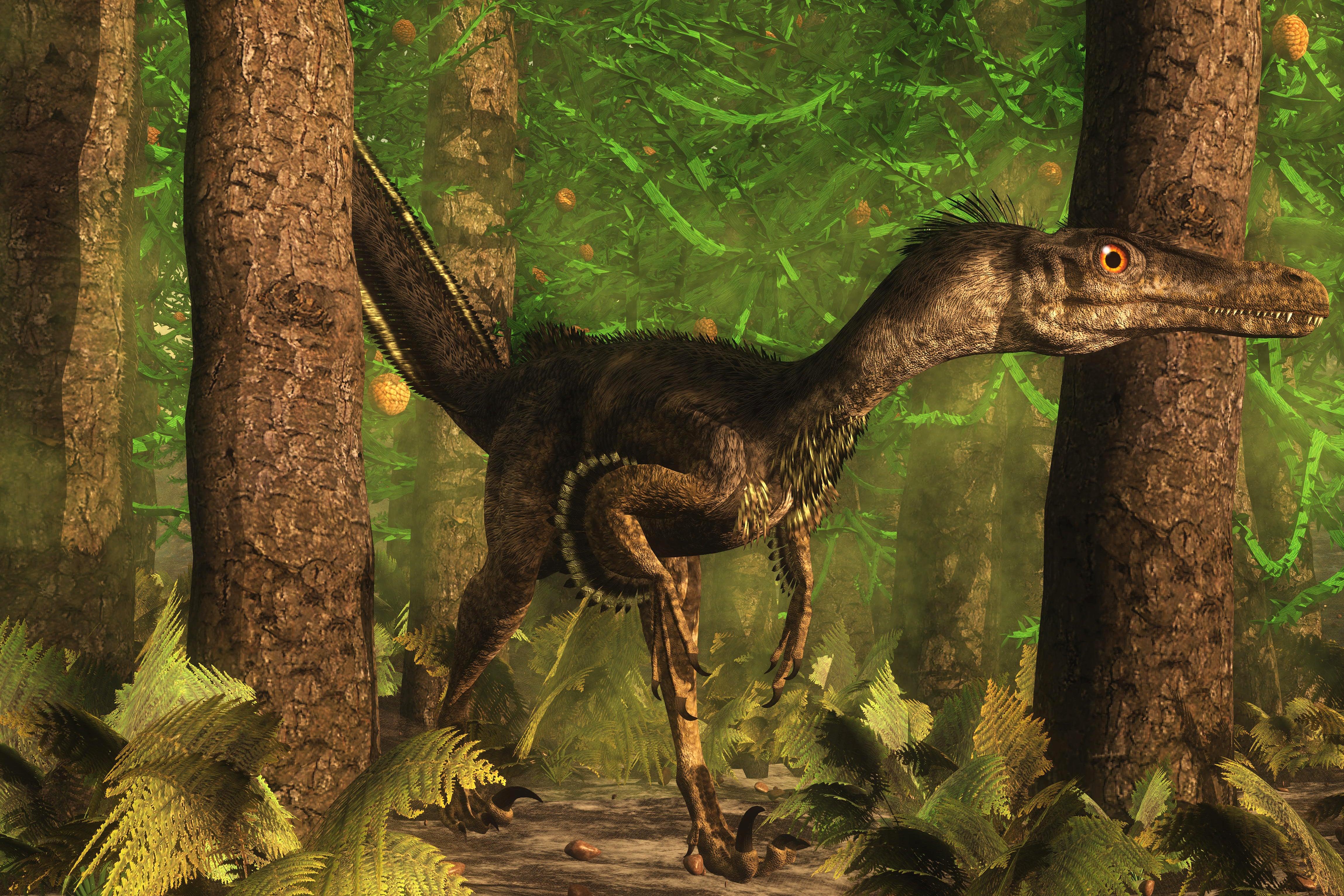 Velociraptor
