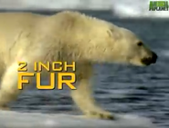 AFO Polar Bear