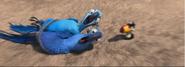 Blu and Jewel Screaming