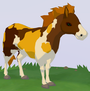Chincoteague Pony WOZ