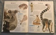 DK Encyclopedia Of Animals (103)