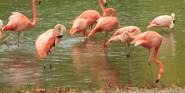 Milwaukee County Zoo Flamingos