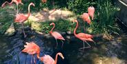 Pittsburgh Zoo Flamingos