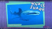 SciShow Kids Whalesharks