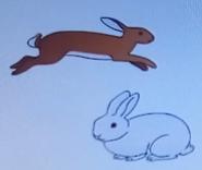 Batw-animal encyclopedia-rabbit
