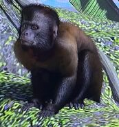 Black Capuchin ZTX