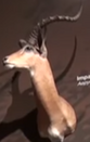 CMONH Impala