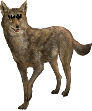 Vanessa the Coyote (Ferdinand; OC)