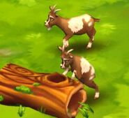 Domestic-goat-zoo-2-animal-park