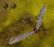 Dragonfly IC