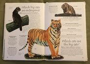 Endangered Animals (Over 100 Questions and Answers to Things You Want to Know) (11)