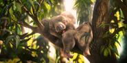Lil Dicky Koala