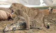 Lion, Eurasian Cave