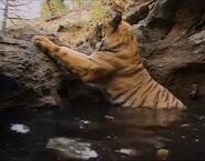 MATG Tiger