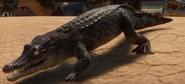 Planet Zoo Crocodile