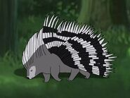 Rileys Adventures Cape Porcupine
