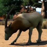 Scimitar-oryx-zootycoon3
