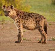 Spotted Hyena (V2)