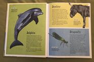 The Dictionary of Ordinary Extraordinary Animals (12)