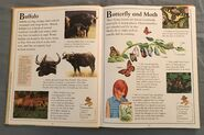 The Kingfisher First Animal Encyclopedia (11)