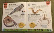 Weird Animals Dictionary (14)
