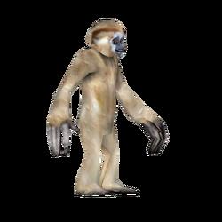 ZT Crested Gibbon.webp