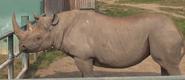 Howlett's Wild Animal Park Rhino