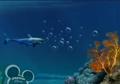 Little Einsteins Shark