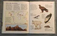 Macmillan Animal Encyclopedia for Children (29)