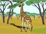 Rileys Adventures Rothschild's Giraffe
