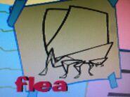 Stanley flea