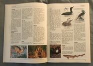 The Kingfisher Illustrated Encyclopedia of Animals (46)