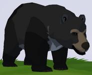 Asian Black Bear WOZ
