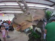 DinoStroll Triceratops